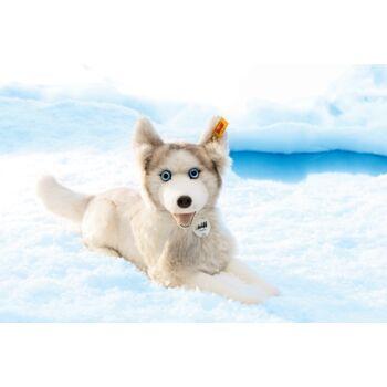 Steiff szibériai husky kutya - fehér - Bunny and Teddy